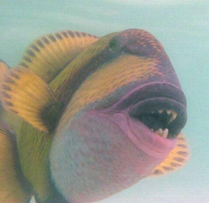 Los peces mas feos.