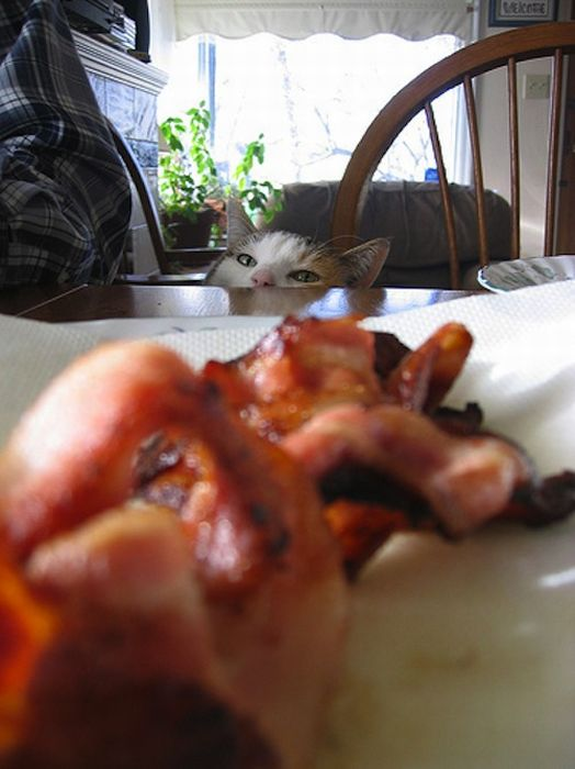 Cats and Bacon (23 pics)