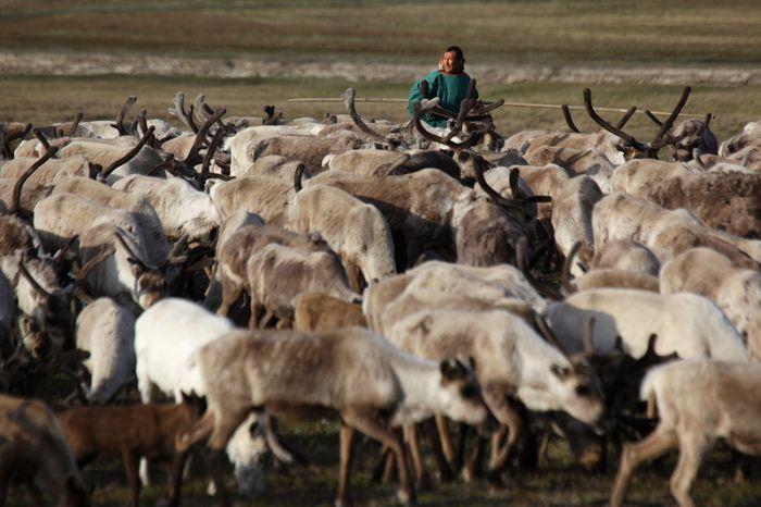 Siberian Deer Herders (41 pics)