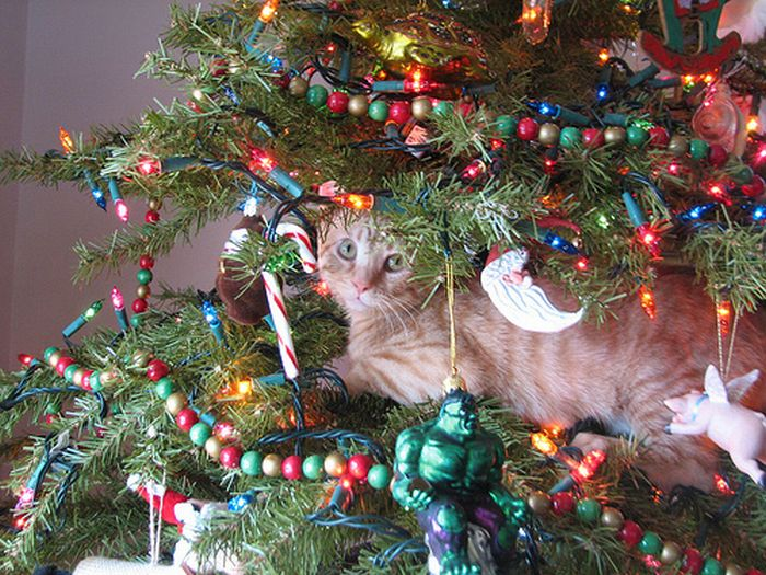 cats in christmas trees 20 pics - How To Keep Cats Away From Christmas Trees