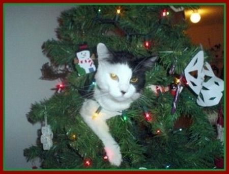 Cats in Christmas Trees (20 pics)