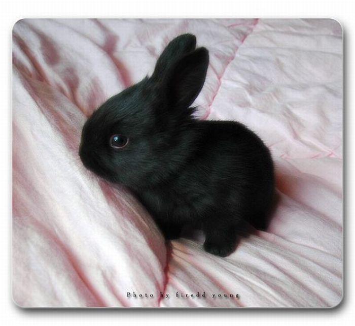 Cute Rabbits (40 pics)