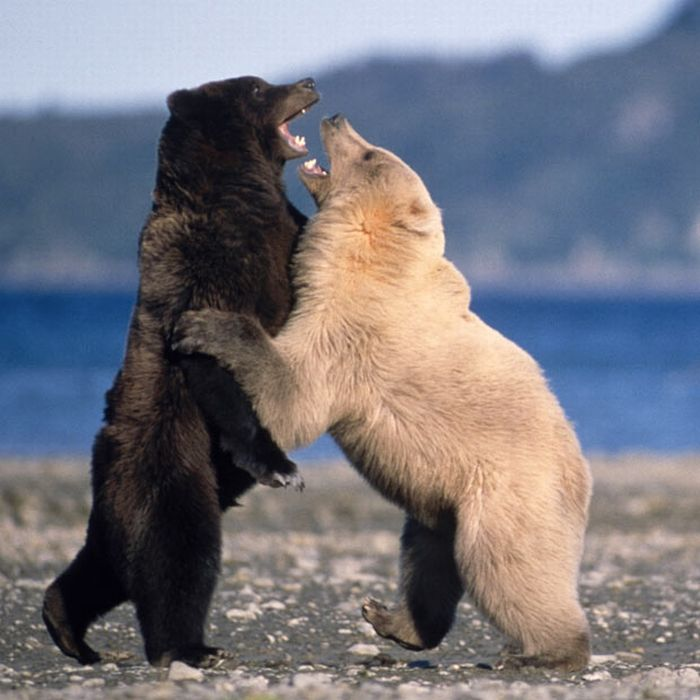 Las mejores fotos de animales del 2010