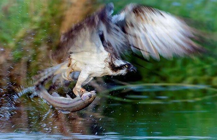 The Best Animal Photos of 2010 (30 pics)