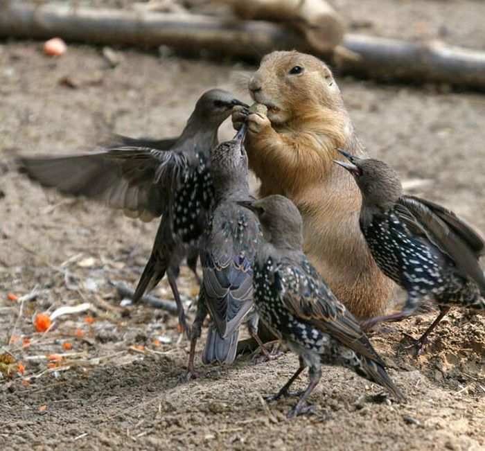 Vienkārši jaukas, skaistas un interesantas bildes par jebko Animal_photos_26