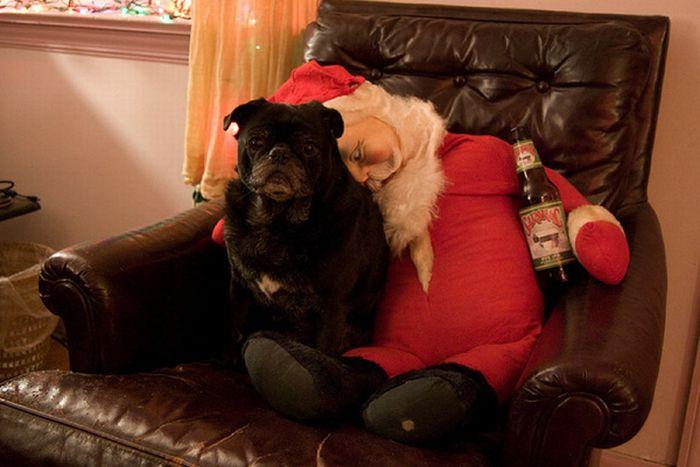 Christmas Pugs (45 pics)