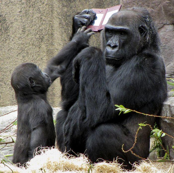 Animals with Human Behavior (28 pics)