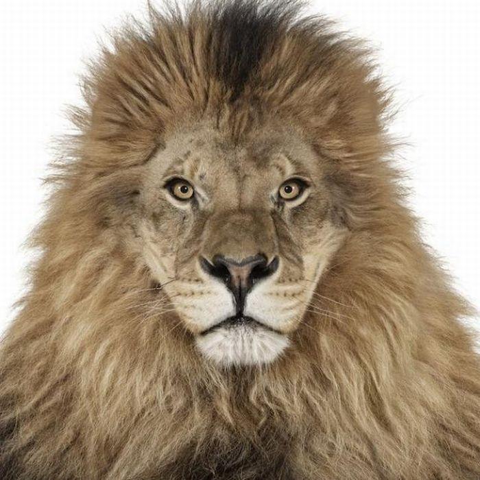 Beautiful Animal Portraits (25 pics)