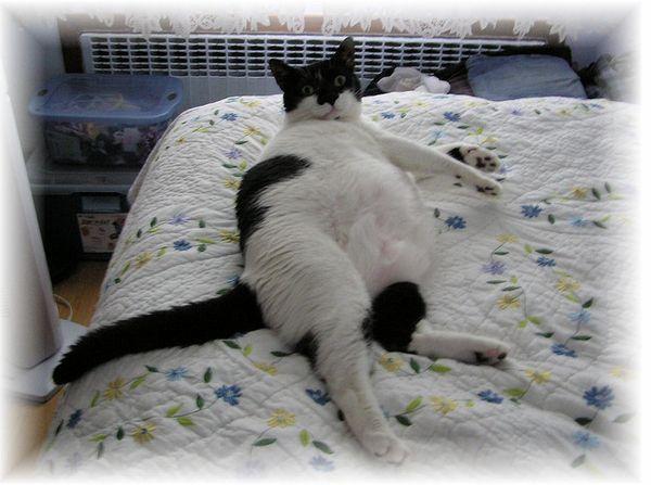Fat Cats (50 pics)