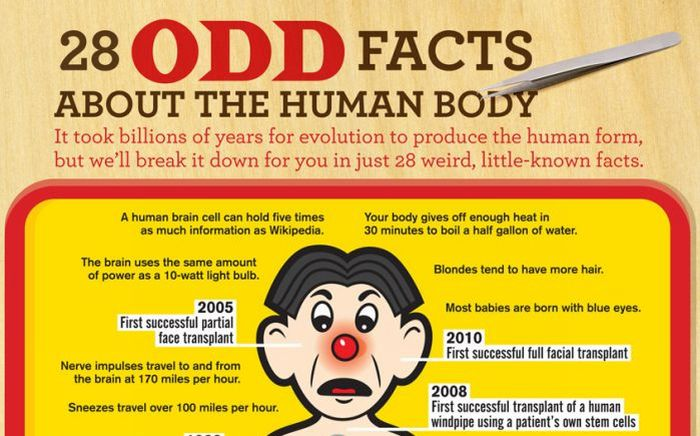 28 Odd Facts About the Human Body (infographic)