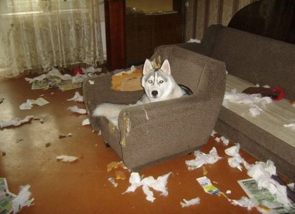 Troubles with Husky (140 pics)
