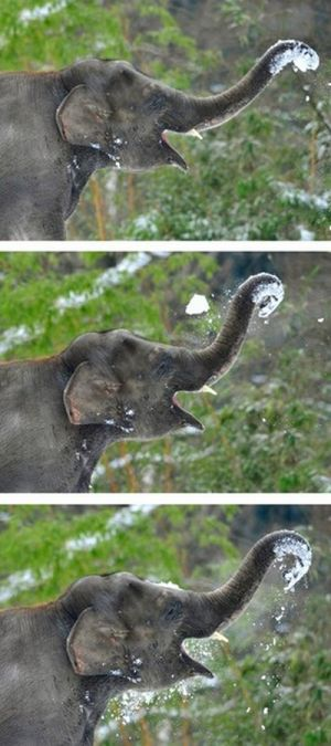 Elephants Playing in Snow at the Berlin Zoo (14 pics)