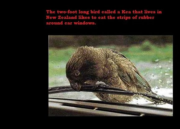 Interesting Facts (24 pics)