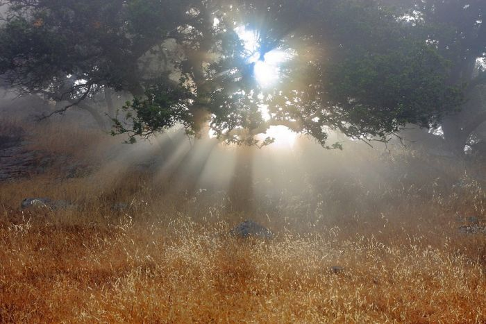 Beautiful Nature (50 pics)