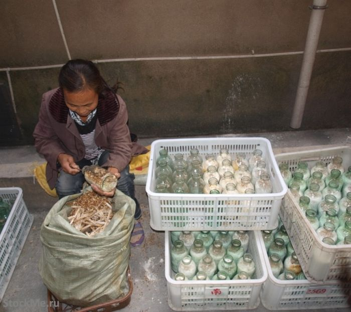 How To Grow Chinese Mushrooms (13 pics)