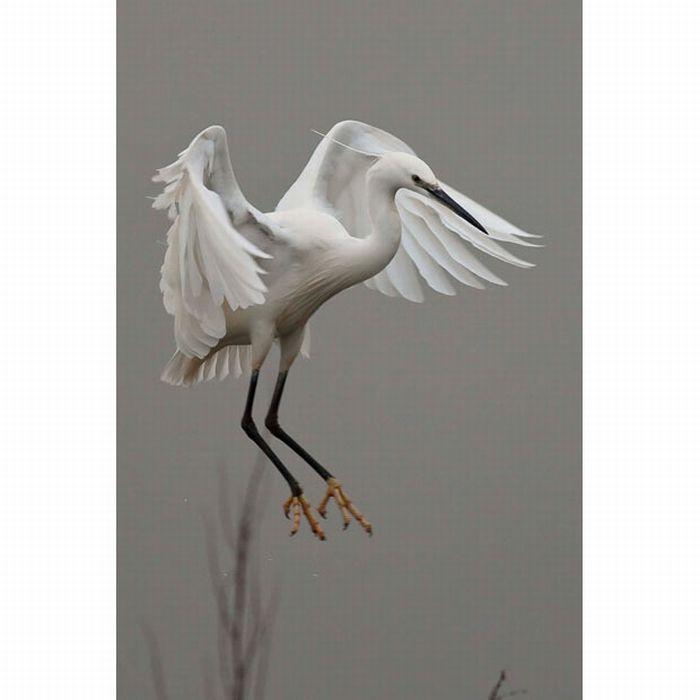 Wetland Wildlife (13 pics)