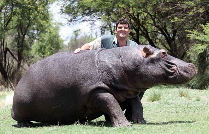 Friends with a Hippo (4 pics)