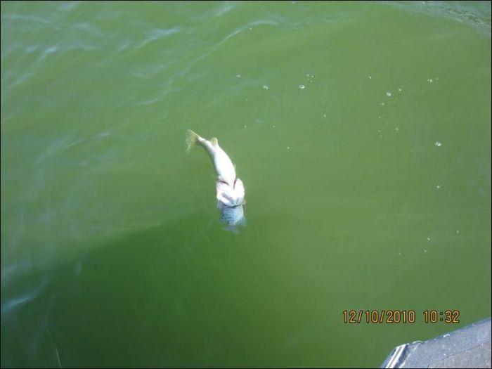 Unusual Catch (4 pics)