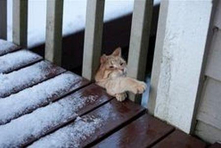 Cat Fail (6 pics)