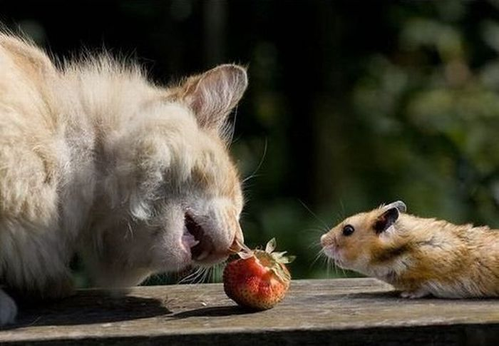 Sweet Couple. Cat and Mouse (4 pics)