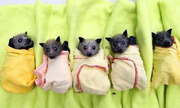 New Home for Baby Bats (21 pics)