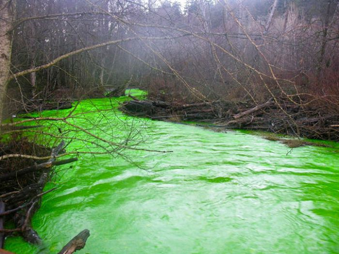 Neon Green River (17 pics + 1 video)