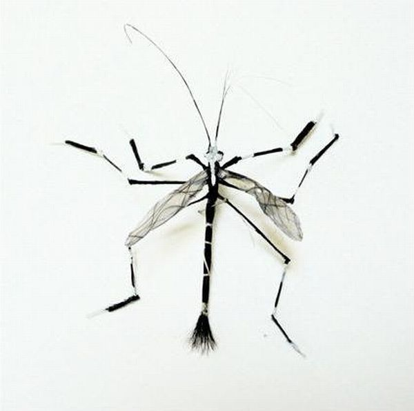 Adrienne Antonson Makes Insects Out of Human Hair (14 pics)