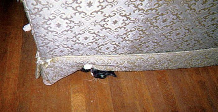 Sneaky Kitties (40 pics)