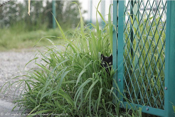 Sneaky Kitties (40 pics)