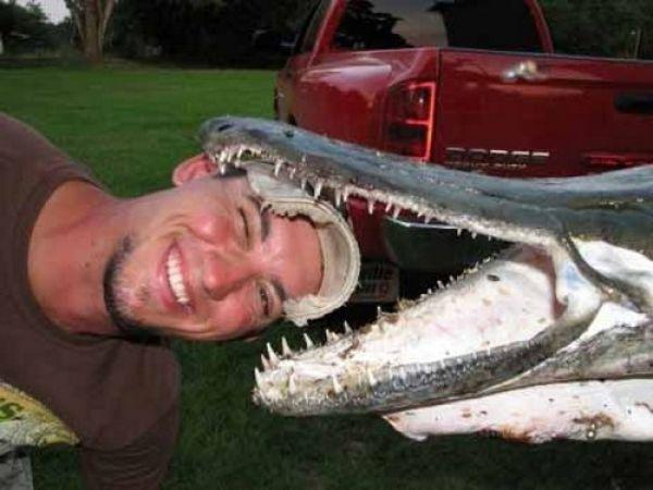 Alligator Fish Called Alligator Gar (10 pics)