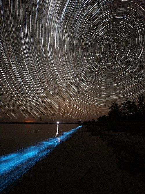 Bioluminescent Lake in Australia (8 pics)
