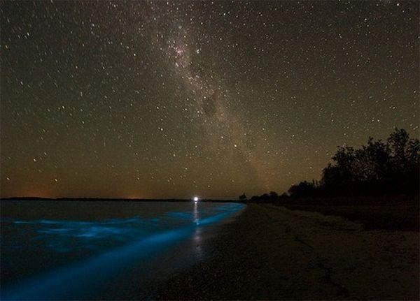 Bioluminescent Lake in Australia (8 pics)