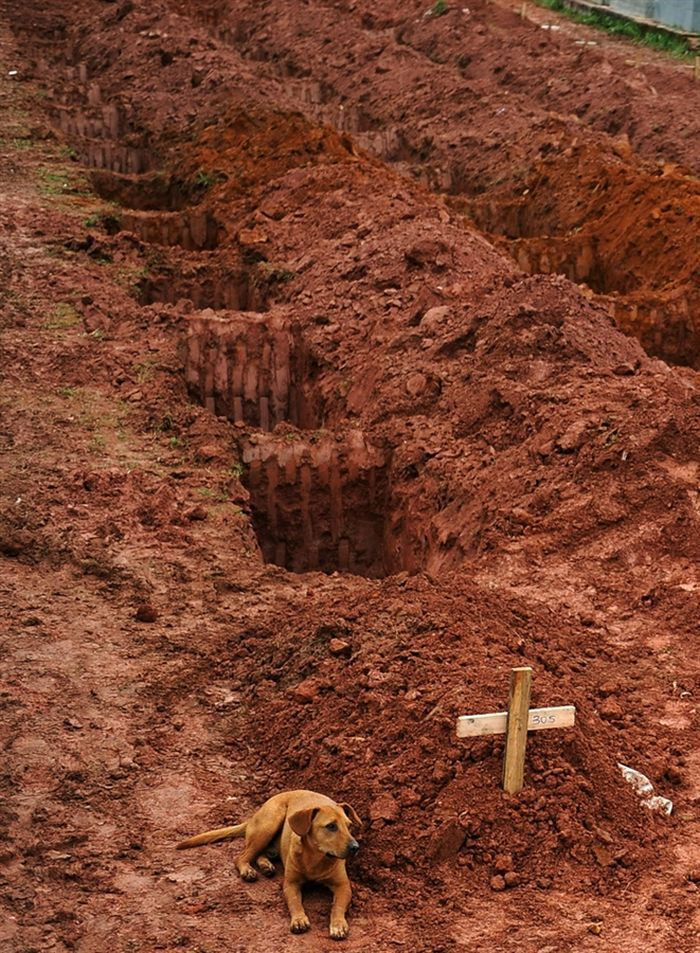 A Dog Takes Its Loyalty to the Grave in Brazil (1 pic)