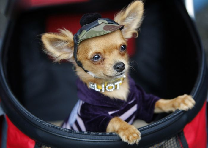 Dressed Up Dogs (38 pics)