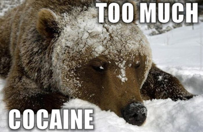 Cocaine Animals (27 pics)