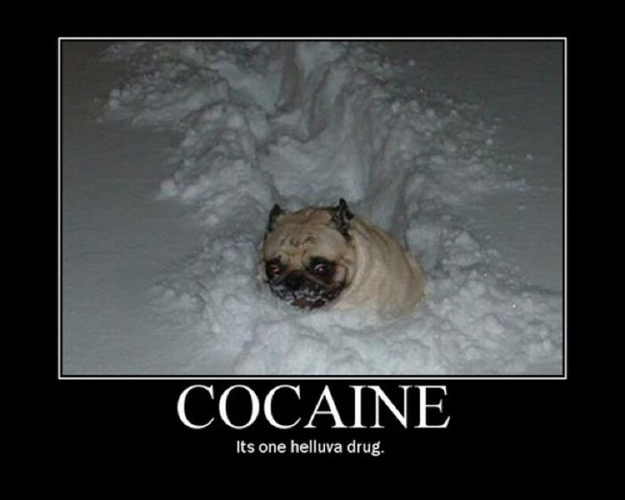 Cocaine Animals (27 pics)