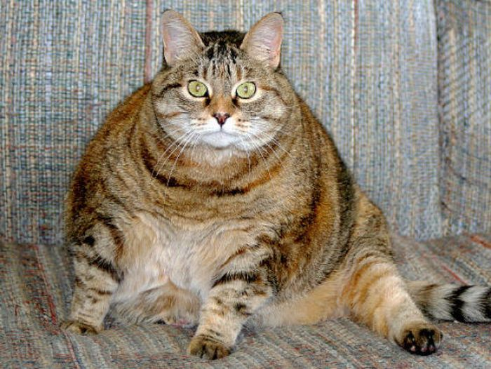 Chubby Animals (100 pics)