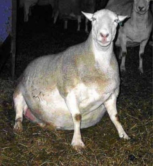 Chubby Animals (100 pics)