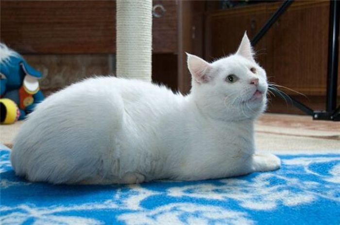 Amazing Cats' Transformations (26 pics)