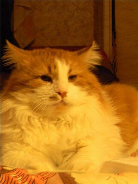 Amazing Cats' Transformations (26 pics)
