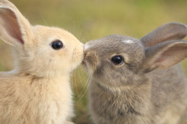 Cute Animals Show Feelings (30 pics)
