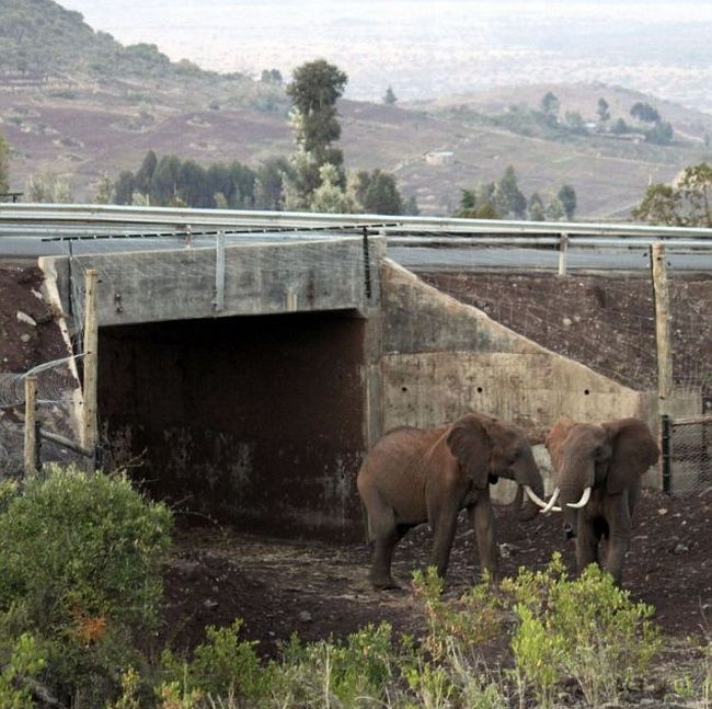 Africa's First Elephant Underpass (4 pics)