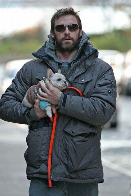 Hugh Jackman and His French Bulldog, Peaches (24 pics)