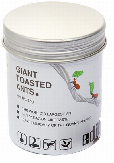 Giant Toasted Ants?  (3 pics)
