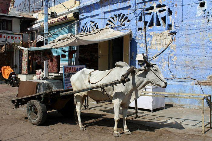 Blue City Jodhpur (27 pics)