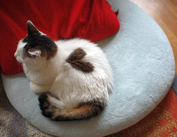 Cats with Fur Hearts (20 pics)