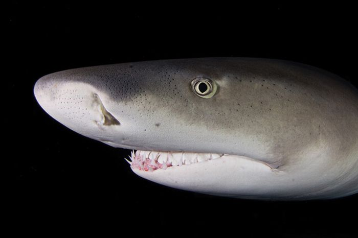 Sharks Up Close (15 pics)
