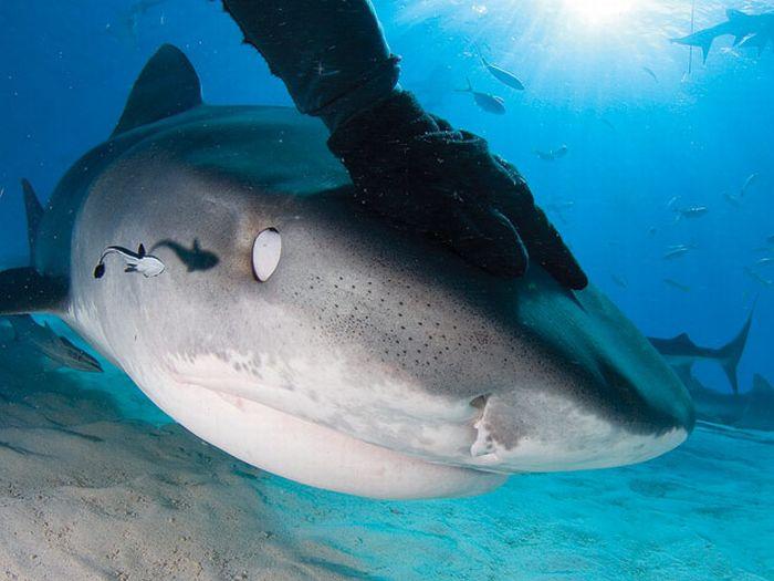 Sharks Up Close (15 pics)