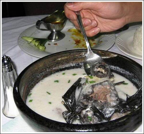 Delicious Bat Soup (11 pics)