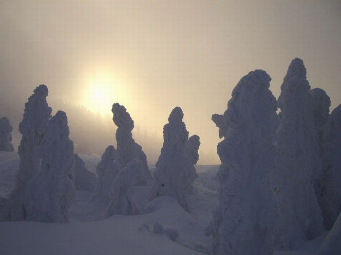 """""""Snow Monsters"""" of Japan (25 pics)"""